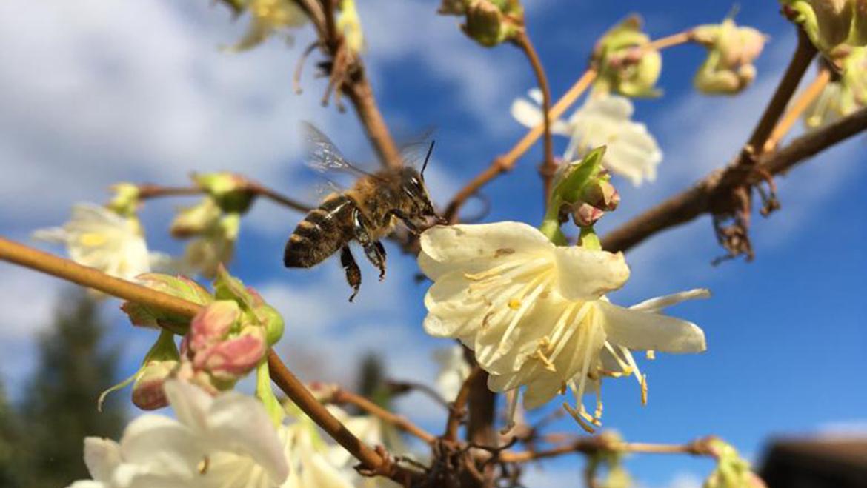 Willkommen bei der Bienenbäuerin